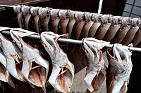 Busan (South Korea): fish drying at the Sindonga-Jagalchi Market