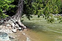 tree next to the Similkameen River, British Columbia, Canada