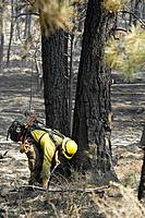 Wildland fire fighter