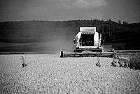 Claas Harvester in a Cornfield