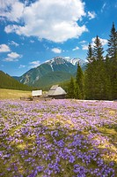 Chocholowska Valley, Tatra National Park, Poland, Europe