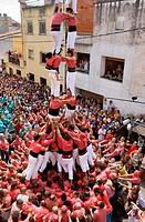 Colla Vella dels Xiquets de Valls, ´Castellers´ (human towers), a Catalan tradition. Doctor Robert street, La Bisbal del Penedès, Tarragona province, ...
