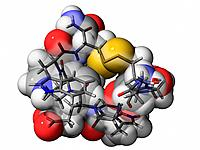 Contryphan_R, molecular model. This peptide is an active component of the venom produced by the sea snail Conus radiatus. Atoms are represented as sph...