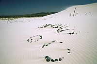 Italy - Sardinia Region - Carbonia-Iglesias province - Sant'Anna Arresi - Porto Pino beach, sand dunes