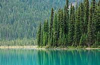 Lush green vegetation around a lake, Rocky Mountains, Canada