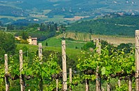 San Gimignano, Vineyards, Tuscany, Italy, Siena Province, UNESCO World Heritage Site