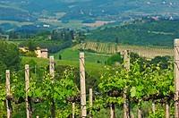 San Gimignano, Vineyards, Tuscany, Italy, Siena Province, UNESCO World Heritage Site