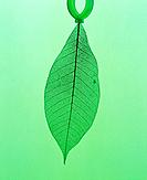 Green leaf, computer graphic, green background