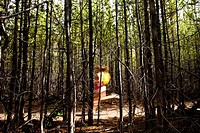 Woman jogging through a thick forest.