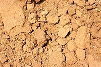 Dirt Ground. Setagaya_ku, Tokyo, Japan