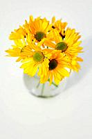 Studio shot of yellow flowers in vase