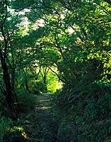 Kumano Furumichi, Wakayama Prefecture, Japan