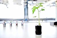 Seedling growing in laboratory