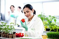 Female scientist examining tomatoes in laboratory