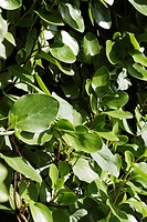 Close_up of leaves, Dublin, Republic of Ireland