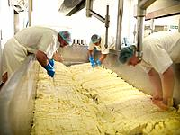 Workers chopping cheese in factory