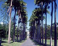 Codrington Theological College. Grounds campus . Palm trees. Driveway