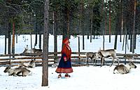 Laplander woman in traditional red woven long coat surrounded by Reindeer.