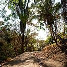 Pathway through Costa Rica landscape