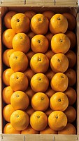 Oranges with water drops in crate