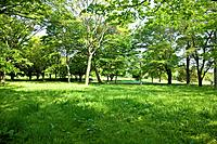 Field of green trees, Tama city, Tokyo prefecture, Japan