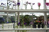 Flowers in vases, Stockholm, Sweden