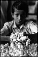 Boy holding silk worm cocoons in Ramanagaram Karnataka.
