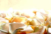 White rose petals