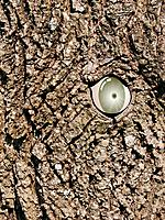 An eye in a tree