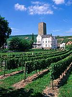 The Boosenburg is a 12th century defensive castle in the Rhine valley,overlooking the vineyards on the slopes of the valley.