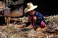Woman in ethnic traditional dress. Spreading shallotts/ onions to dry on ground.