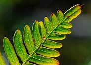 Macro of a green fern leave