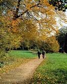 D-Krefeld, Rhine, Lower Rhine, Rhineland, North Rhine-Westphalia, NRW, D-Krefeld-Linn, park, castle gardens, trees, meadow, autumnal, autumn leaves, f...