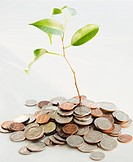 Plant growing on heap of coins, studio shot