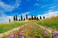 Val d'Orcia  Orcia Valley  Farm with cypress trees  Fields and Farmhouses  Tuscany Landscape  UNESCO world heritage site  Pienza  Siena Province  Tusc...