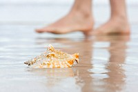 Shell and bare feet on beach