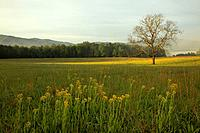 Cades Cove, Great Smoky Mountains National Park