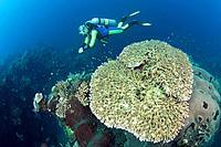 Scuba Diving at Bali, Alam Batu, Bali, Indonesia