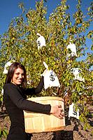 woman harvesting money bags from money tree, edmonton, alberta, canada
