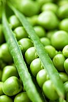 Close up of garden peas