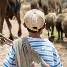 A Boy Watching Cattle, Sacred Valley Peru