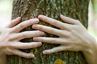 Woman´s hands embracing tree