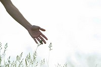 Young woman´s hand touching tall grass