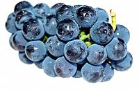 Close_up grape