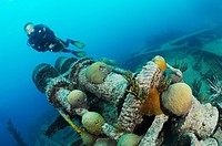 Scuba diver explores windless of ship wreck Pelinaion, Bermuda Island, Atlantic