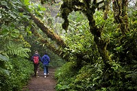Young couple walking along a trail in the Monteverde Cloud Forest Reserve in Costa Rica