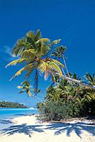 Sandy beach with palm trees, Man in a palm tree, Aitutaki Lagune, Cook Islands, South Pacific