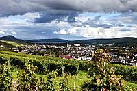Europe, Germany, Rhineland_Palatinate, Bad Neuenahr_Ahrweiler, Red wine hiking trail with bunches of grapes in vineyard