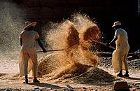 Harvest workers, Morocco, Africa