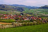 Cherry_blossom at Feldberg_Obereggenen, Spring, Markgraflerland, Black Forest, Baden_Wuerttemberg, Germany, Europe